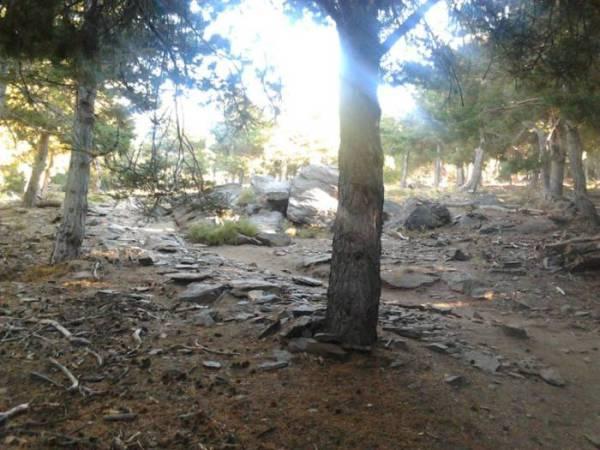 Los bosques de la Alpujarra