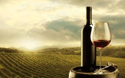 Caminos de vino, ruta de bodegas de vino en Valladolid