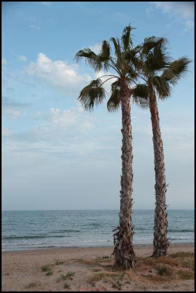 palmiers espagne