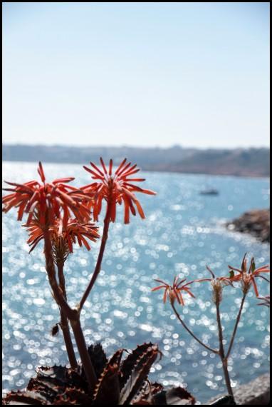 fleurs espagne