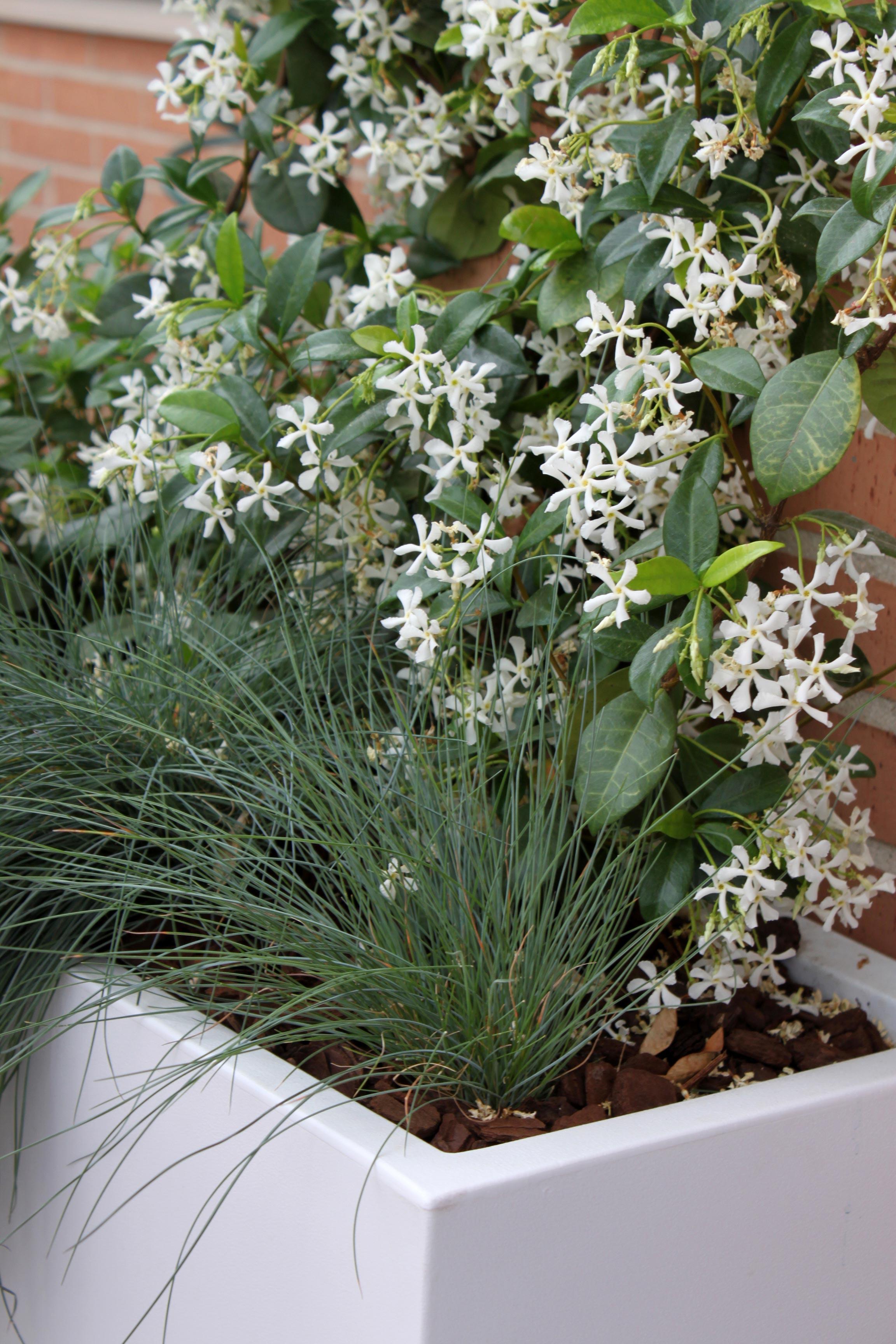 Las 9 mejores plantas para terrazas la habitaci n verde for Plantas aromaticas exterior todo el ano