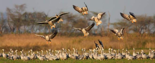Two persons fined for illegal hunting of waterfowls