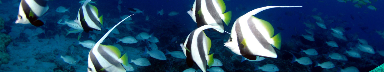 Diving_in_Seychelles_Slider_03