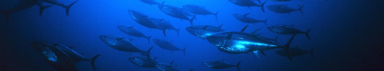 Fishing_on_La_Digue_Island_Seychelles_slider01