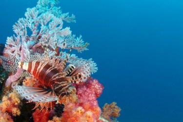 La_Digue_Island_Seychelles_11