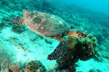 La_Digue_Island_Seychelles_12
