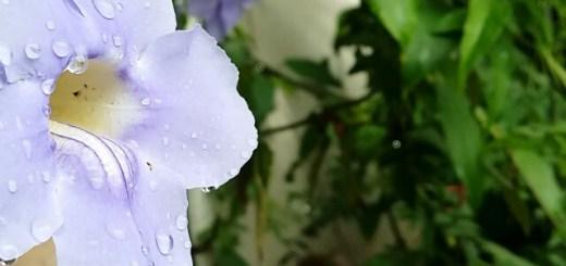 baguio-city-flower-mothers-garden