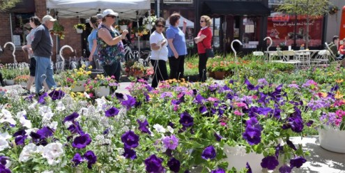 Flower Fair flourishes in downtown Lake Orion this weekend   Lake     Flower Fair flourishes in downtown Lake Orion this weekend