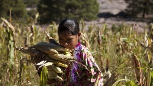 Sunú: Nuestra identidad muere en los campos