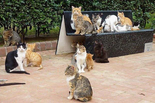 10 мест вСтамбуле, куда ходят сами стамбульцы. Изображение №6.