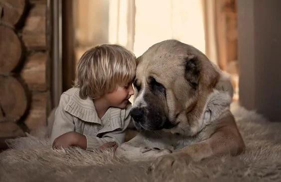 amor a un animal: perro con un niño