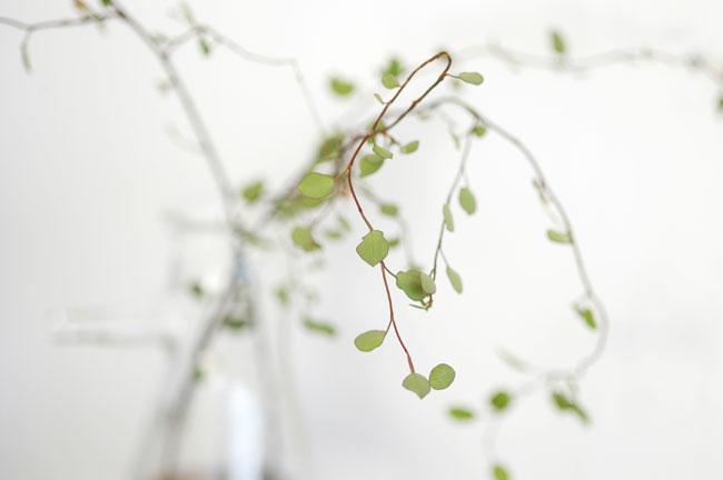 Plants & Glass
