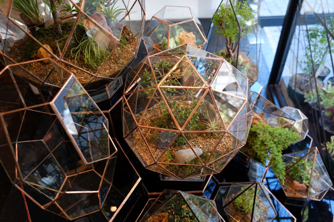 Angles and Earth Terrariums