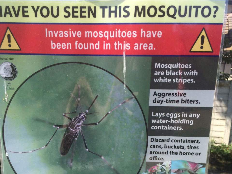 Signs like these can be found in nearby neighborhoods where mosquitoes have been found. (Anna Foschetti/Lariat)