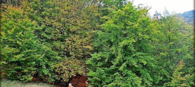 El Faedo de Orzonaga en otoño