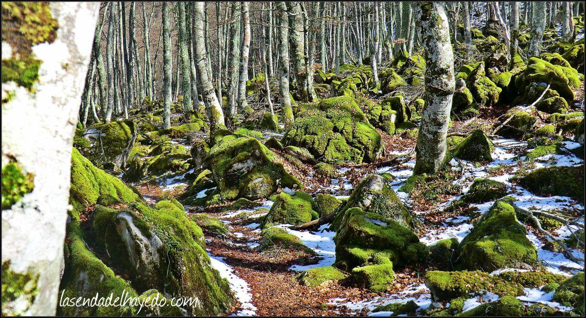 Bosque y braña de Gumial - Aller