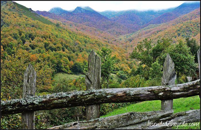 Entorno del urogallo. Montes de Teverga.