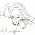 Wolf Puppy Sketch