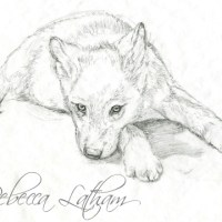 New Wolf Puppy Painting - Sketch
