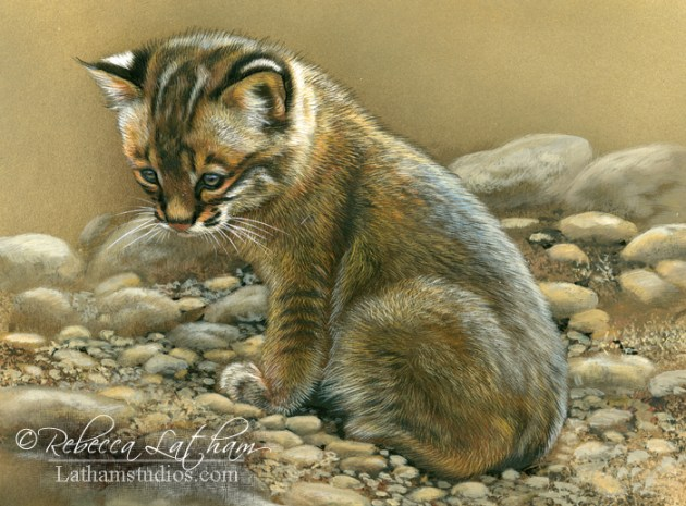 Lost in Thought - Bobcat Kitten, 5in x 7in, watercolor on board with sterling silver, ©Rebecca Latham