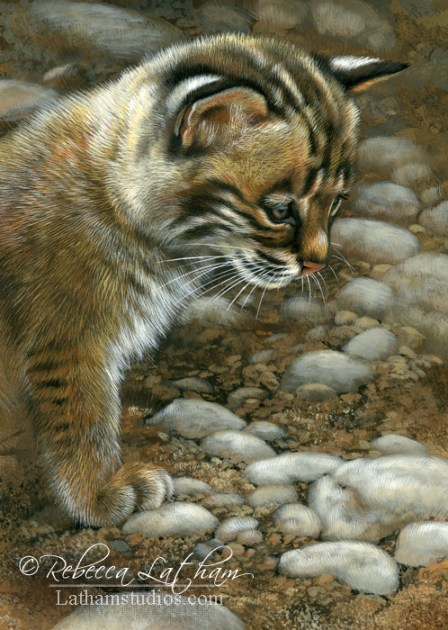 Stop and Watch - Bobcat Kitten, 5in x 7in, watercolor on board with sterling silver, ©Rebecca Latham