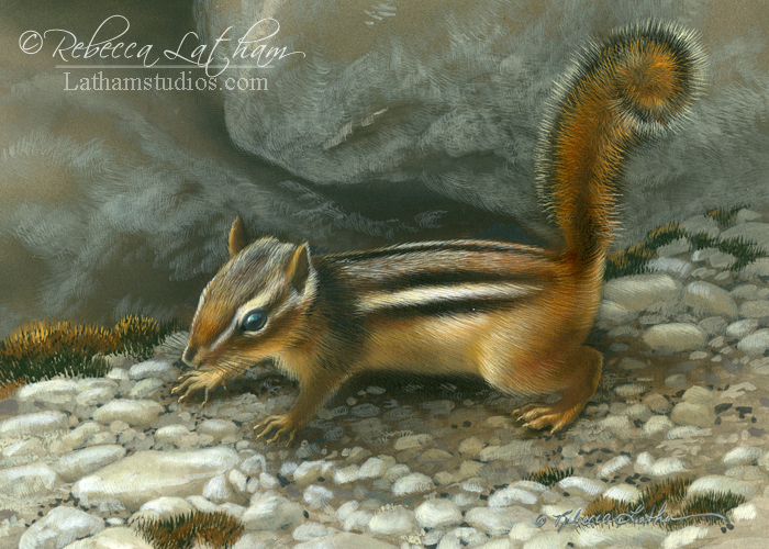 Chipmunk, 5in x 7in, opaque and transparent watercolor with sterling silver and 24kt gold on board, ©Rebecca Latham
