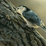 "Tree Investigation - Nuthatch, 5"" x 7"", watercolor on board,  ©Rebecca Latham - The Snowgoose Gallery The Art of the Miniature XXIII"