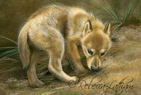 Checking Things Out - Wolf Puppy,  Opaque & transparent watercolor with sterling silver and 24kt gold on board, 6in x 8in, ©Rebecca Latham