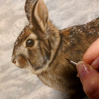 Wildlife watercolor painting by Rebecca Latham