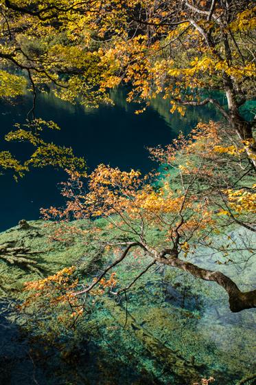 banyan-tree-destination-560h