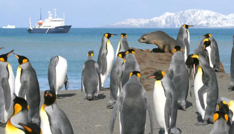 Book Antarctica and fly to South America from $990pp
