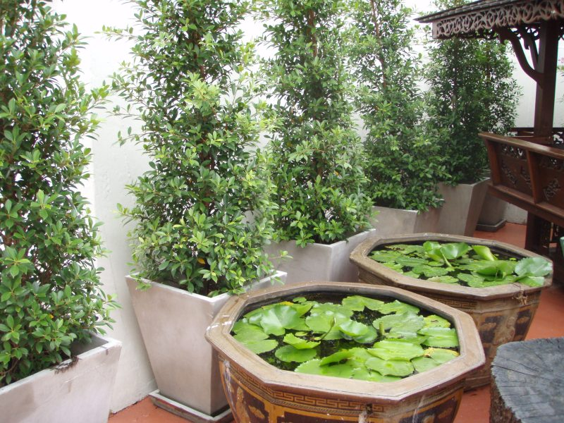 Large Of Hanging Garden Ideas