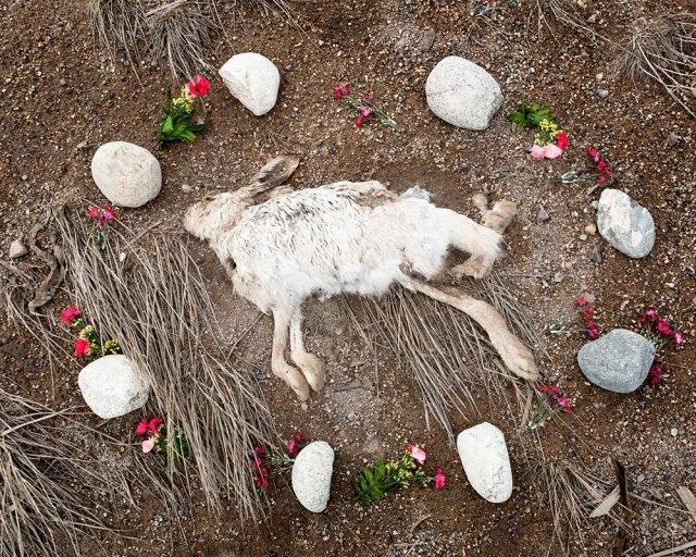 At Rest by Emma Kisiel