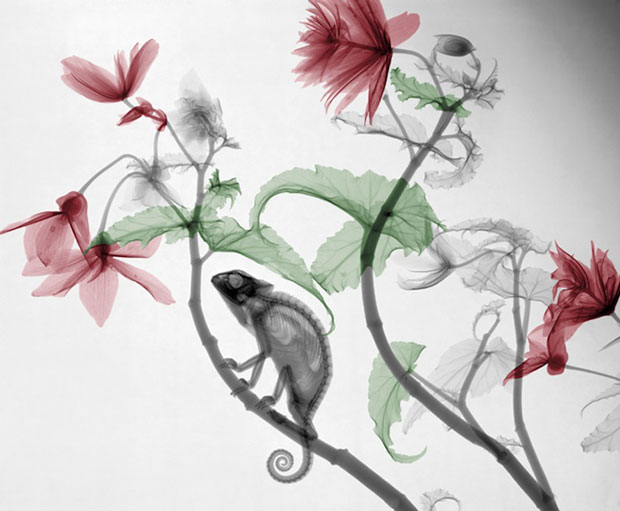 X-Ray Photos of Nature