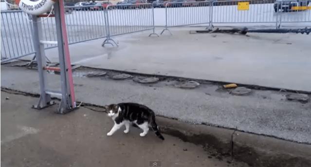 Cat on Dry Land