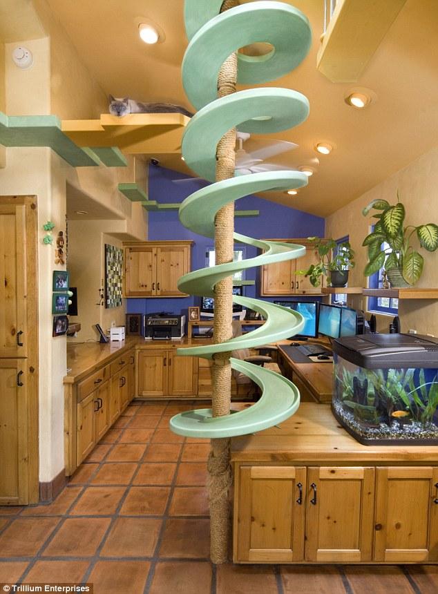 Cat Paradise Kitchen