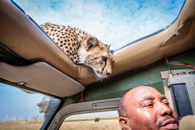 Cheetah and Guide