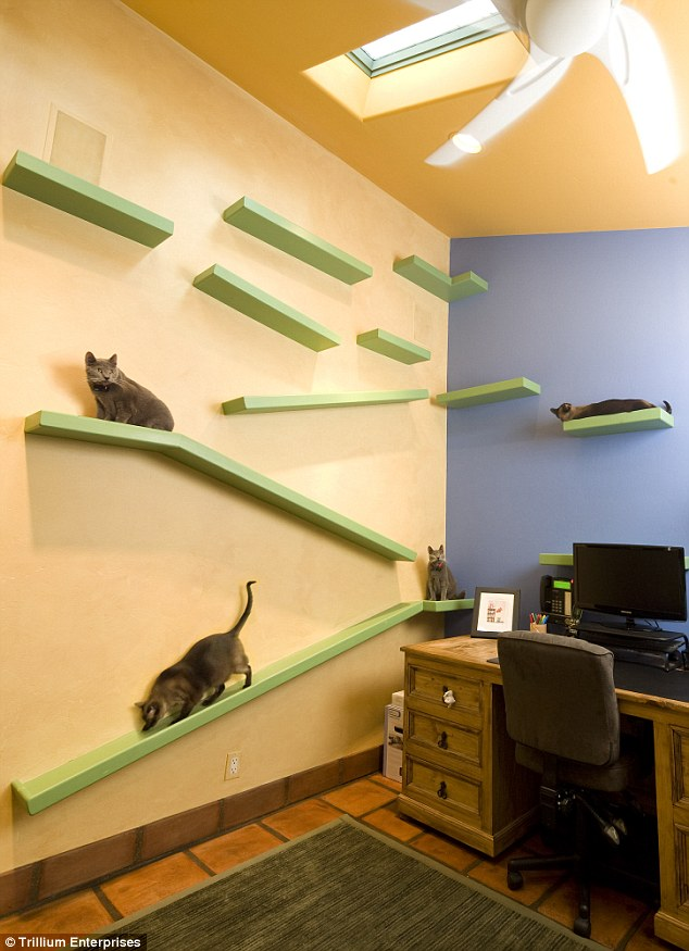 Kitty Paradise Office
