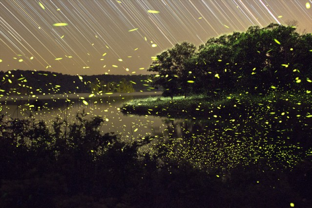 FIrefly Time-Lapse