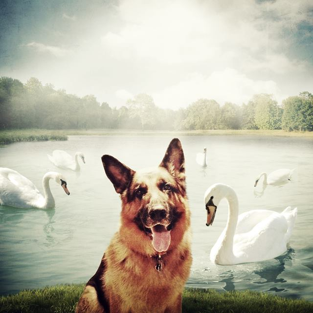Help Dogs With Images - Jober