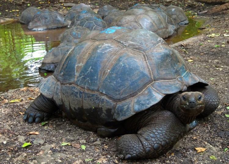 189 Year Old Tortoise
