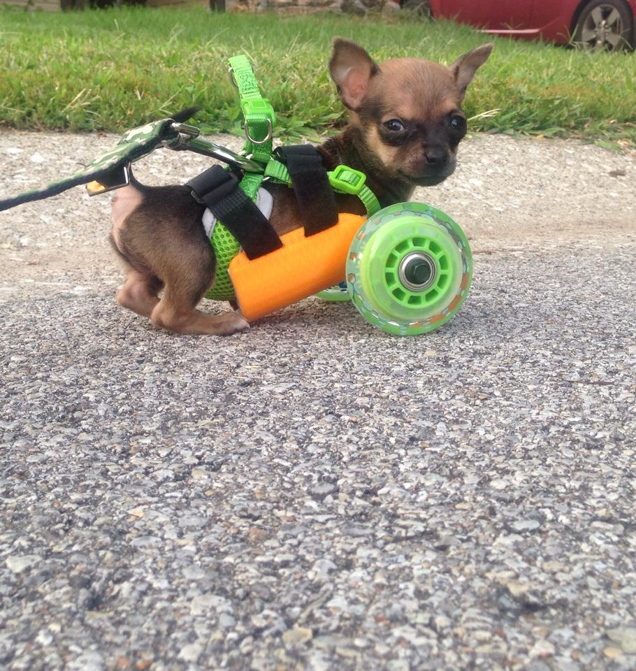 TurboRoo and 3-D Wheels