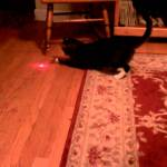Flustered Cat With a Laser Pointer Taped to His Head Tries to Capture the Constantly Moving Dot