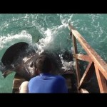 Hungry Stingray Jumps Water Ramp to Make Itself Known to a Pair of Tourists Who Were Tossing Chum Into the Water