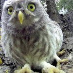 Wide-Eyed Baby Owls Check Out GoPro Camera After Mom Flies Away from the Nest