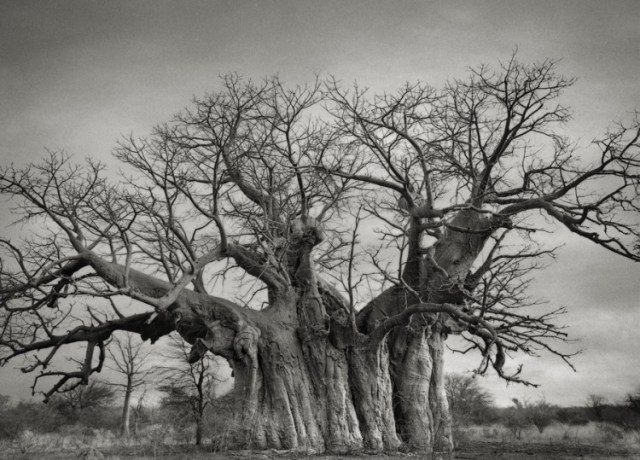 Portraits of Time by Beth Moon