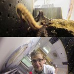 A Filmmaker Tries to Photograph an Octopus Who Steals His Camera and Takes Photos of the Man Instead
