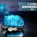 The Dino Pet, A Toy Dinosaur That Comes to Life With Bioluminescent Dinoflagellates
