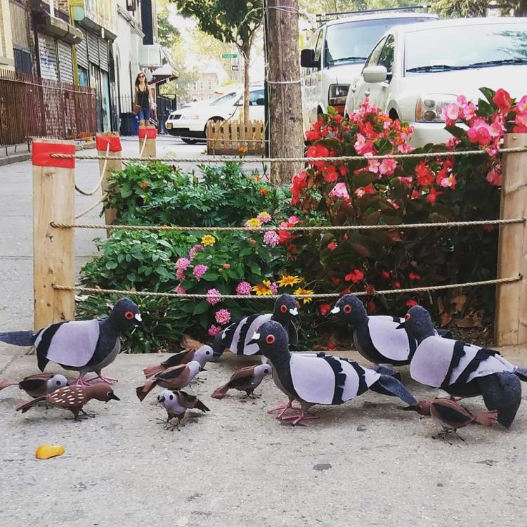 Pigeons and Birds