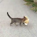 An Enterprising Cat Seeking Companionship Borrows a Plush Tiger From His Neighbor's Yard